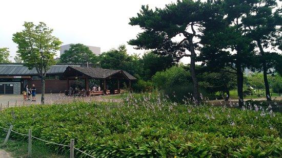 한밭수목원 사진