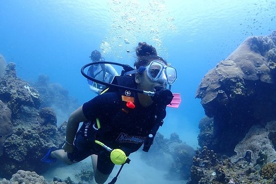 Oplev dykning: Discover Scuba Diving