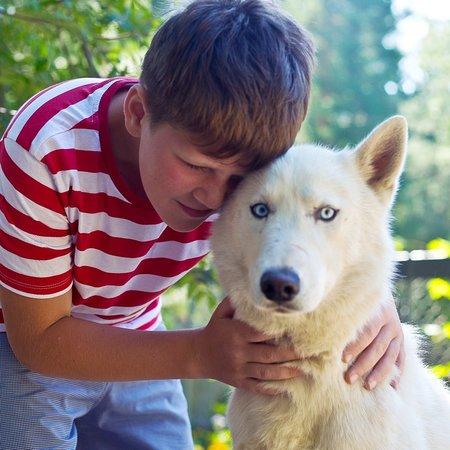 """Utulik, Russland: У нас можно покататься на собачьей упряжке или просто приехать в питомник и пообщаться с ласковым собаками породы """"сибирский хаски"""".В любом случае с собой вы увезете море позитивных эмоций и прекрасных фотографий!"""