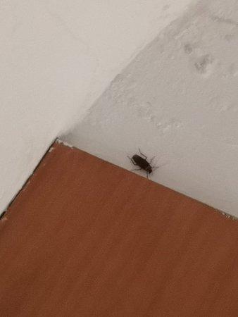 Такой друг живёт у нас в номере