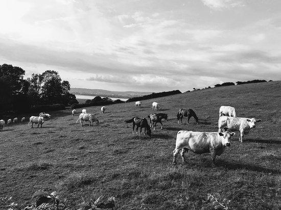 Blaen Cedi Farm 사진