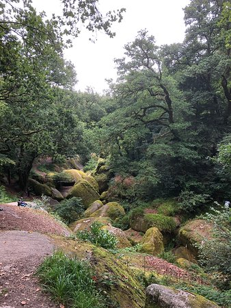 One of the groves to explore