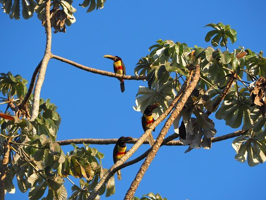 Pantanal Discovery