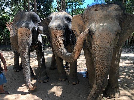 Uitgelezene Elephant Jungle Sanctuary Samui - Bophut   TripAdvisor JI-98