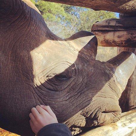 Gomo- the most amazing rhino EVER