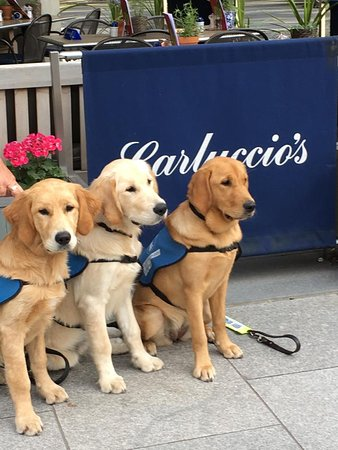 Today was my first of what I hope will be many visits. Lovely food excellently served by very friendly people who were very considerate to our trainee guide dog pups .