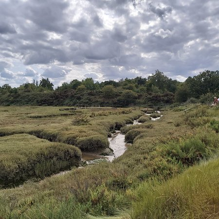 Fingringhoe, UK: Lovely place to watch wildlife and walk