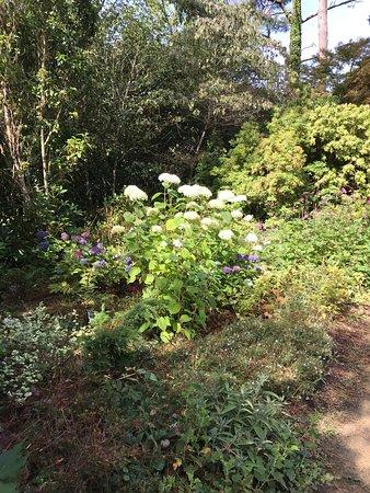 Beautiful Selection of Hydrangeas