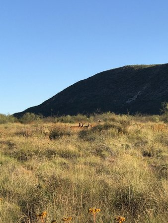 Ranchos en Mapimi Durango