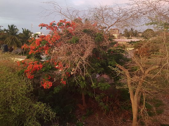 Camara Gardens Guesthouse Kololi: Rooftop view of the Neighbours garden #camaragardens #gambiaaccommodation