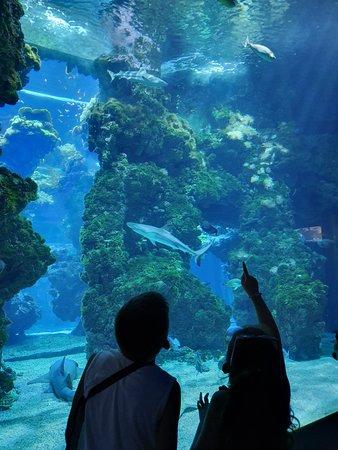 Фотография Oceanographic Museum of Monaco and Aquarium Admission Ticket
