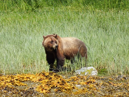Tide Rip Grizzly Tours (Telegraph Cove) - All You Need to