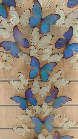 Gerçek kelebekler