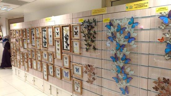 Gerçek kelebekler tabloları