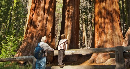 The Redwoods In Yosemite is just 4 miles away from The Mariposa Grove of Giant Sequoias.