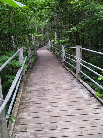 The walking path to the high falls!