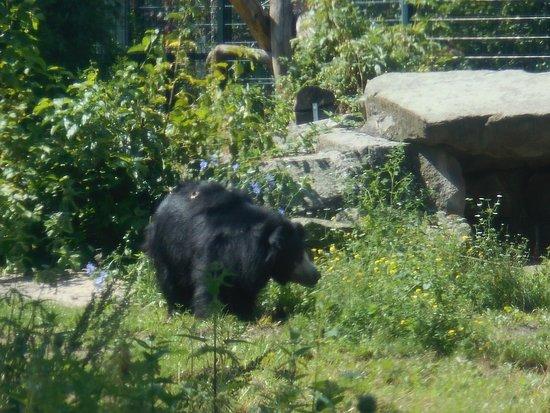 orso del sud est asiatico