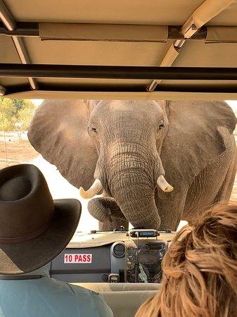 Национальный парк Мана-Пулз, Зимбабве: On A game drive with Lovemore