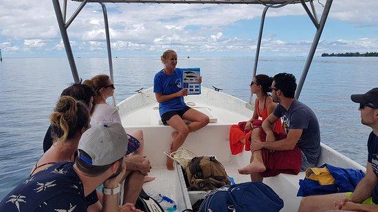 Petite explication en route / Moorea / baleines / dauphins / whale / dolphins