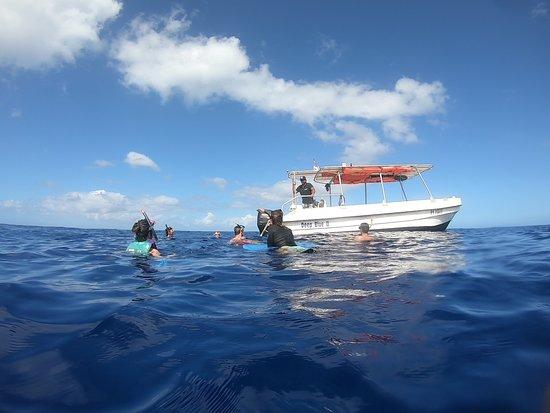 Retour d'une mise à l'eau / Moorea / baleines / dauphins / whale / dolphins