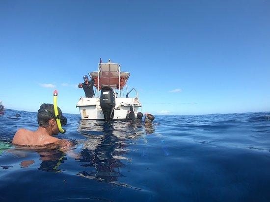 Mise à l'eau / Moorea / baleines / dauphins / whale / dolphins