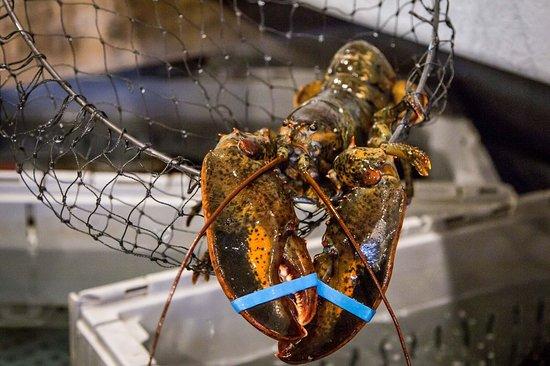 Jacks Seafood Shack & Oyster Bar: LOBSTER