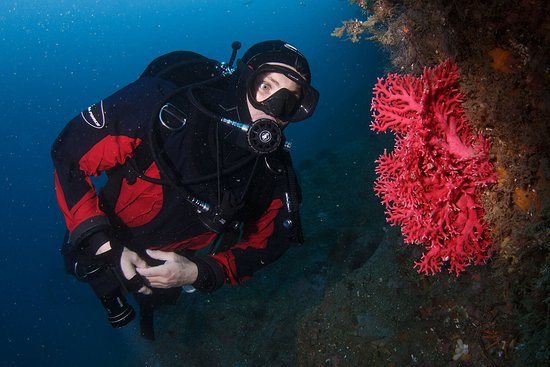 Descend Scuba Diving - Milford Sound: Deepwater Red Coral can be found from about 18 metes onwards, which is a rarity in New Zealand.  Grant Thomas photography