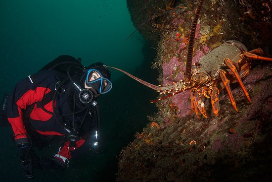 Descend Scuba Diving - Milford Sound: Numerous large crayfish (NZ rock lobsters) can be seen on all of the dives. Grant Thomas photography