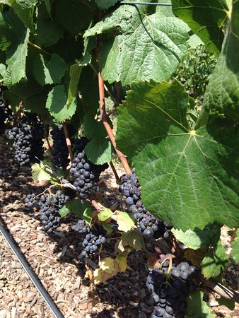 6-Hour Private Wine Tour up to 6 Guests Napa Valley or Sonoma 이미지