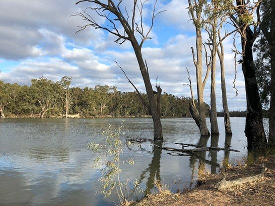Euston, Австралия: Riverside walk
