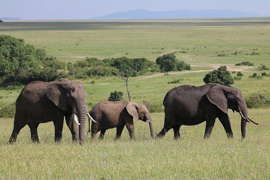On my game drive in Maasai Mara with Julia's River Camp.