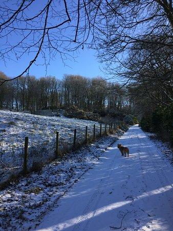Crossmichael, UK: Driveway leading up to Culgruff