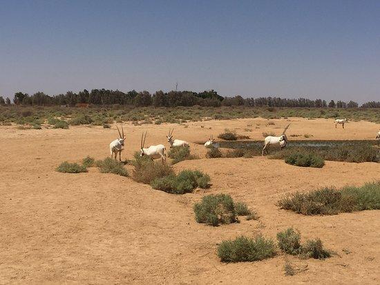 Zarqa Governorate Photo