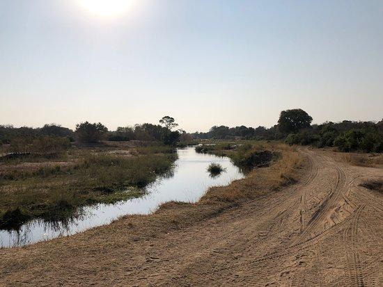 African Safari Group-bild