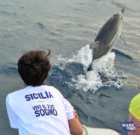 Province of Catania, Italia: Dreams come true with Marecamp's dolphin watching -  Mit Marecamps Delfinbeobachtung werden Träume wahr  - Les rêves deviennent réalité avec l'observation des dauphins de Marecamp  - Dromen komen uit met Marecamp's dolfijnen kijken  - Мечты сбываются с наблюдением за дельфинами Марекампа  - Los sueños se hacen realidad con la observación de delfines de Marecamp -I sogni si realizzano con il dolphin watching di Marecamp-Marecamp的海豚觀賞夢想成真  - Az álmok valóra válnak, amikor Marecamp delfinek figyeli