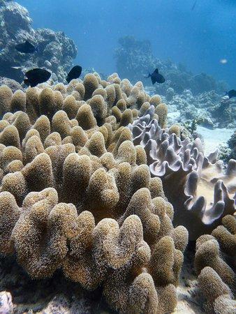 Coral in Menjangan