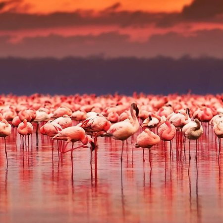 Watching wildlife in Lake Manyara National Park is good all year long, but at its best from late June to September, during the Dry season. Welcome to HFO Brothers Tours & Safaris Book with us through:info@hfobrothers.co Visit our website: www.hfobrothers.com