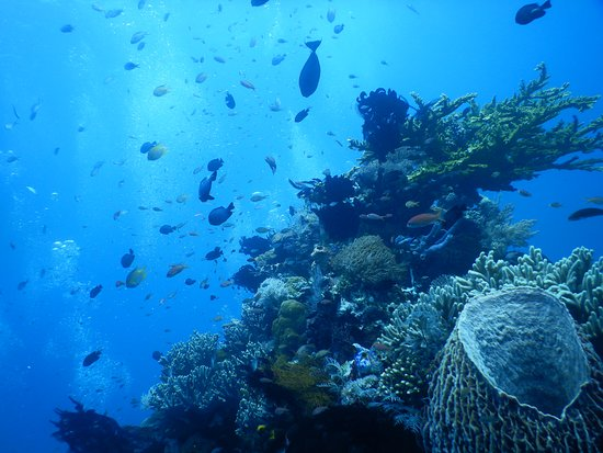 Some of the wonderful reefs