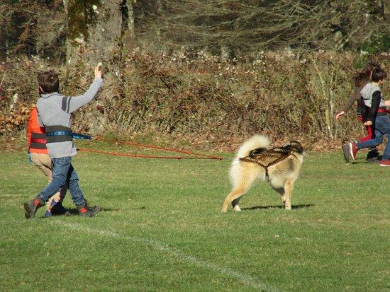Blond, Frankrike: Les enfants adorent être au contact des chiens, ils s'éclatent !