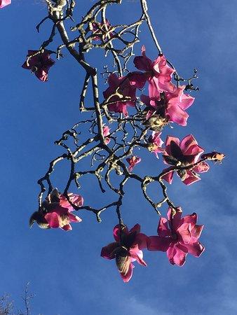 크라이스트처치 식물원 사진