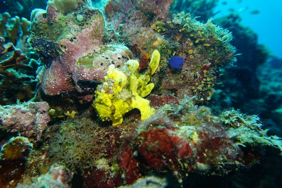 Buceando con Bohol divers