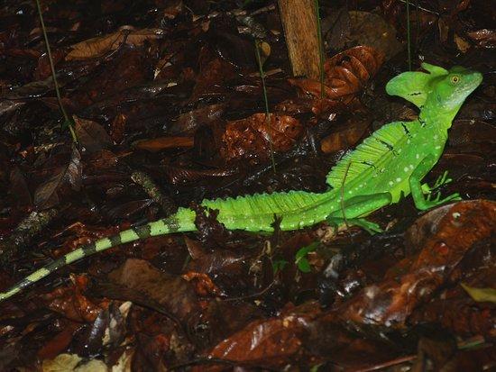 Costa Rica 사진