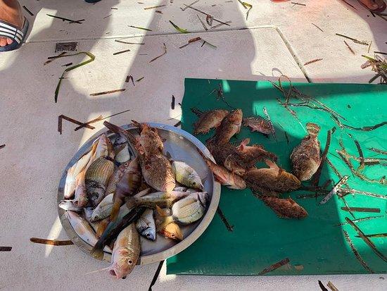 Pesca turismo Michele e Vito  Provenzano