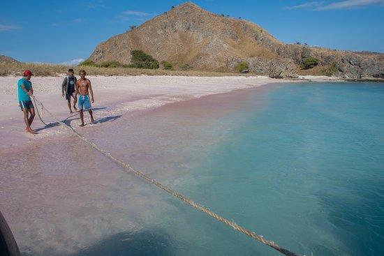 Alexandria Cruise: Une magnifique plage rose grâce au corail rouge
