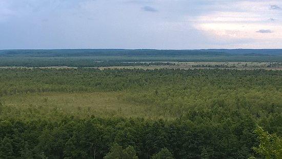 Susanino, Russland: Сусанинское болото (место совершения подвига И.Сусаниным во время смуты).