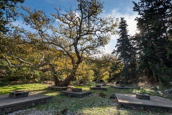 Gavalochori, Grækenland: Δάσος μιας άλλης εποχής