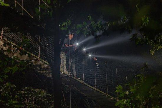 Nocturnal Walk in the Hanging Bridges: Hanging Bridges Night Walk at Mistico Park
