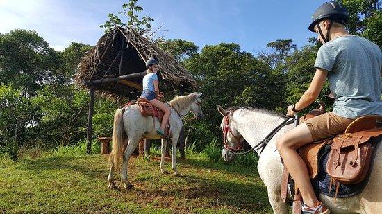 ジャングルの中で乗馬