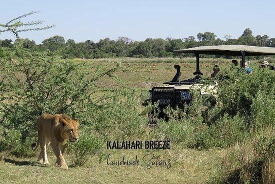 3天荒野小径:Moremi,Khwai和East Okavango...
