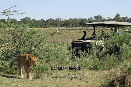 2天荒野小径:Moremi,Khwai和East Okavango...